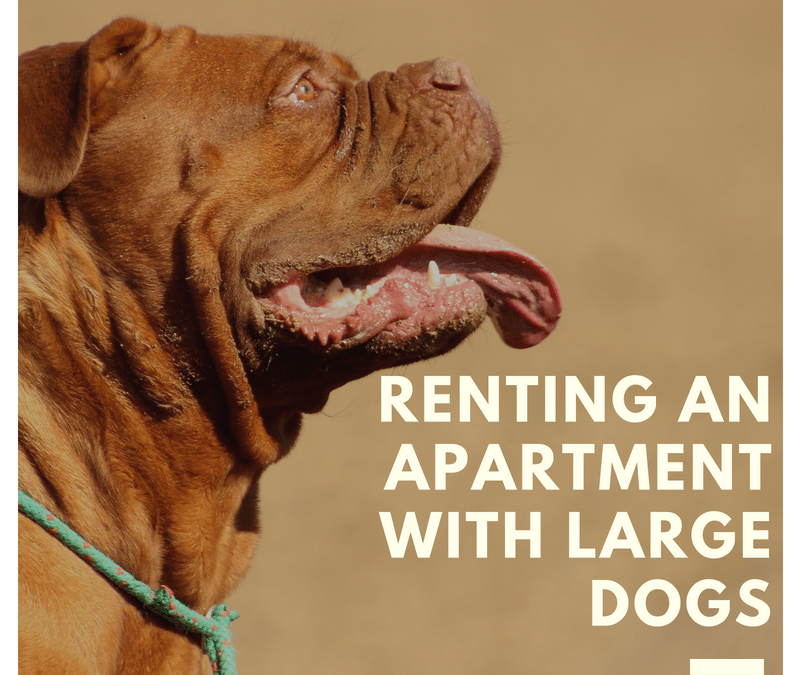 Renting With Large Dogs